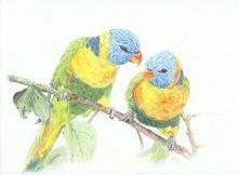 Papużki Forever & Toget...