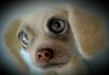 Flamer-nowy pies z filcu