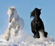Piękne konie biegnące po śn...