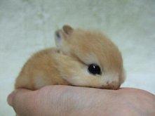 królicek ♥