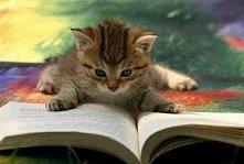 podajecie jakąś fajna książ...