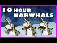 Narwhals | 10 Hours