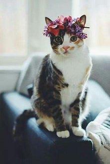 Pastelcat xD