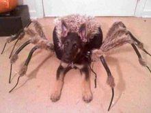 Moje ulubione zdjęcie. Gdy nie mam humoru-wystarczy,że zerknę na tego pajączka:)