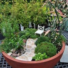 cały ogródek w doniczce ;)
