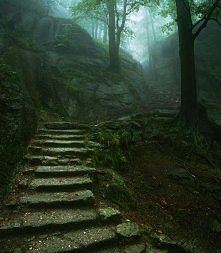 Forest Stairs, Karkonosze, Poland