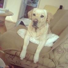 #dog #SABA #MY #LOVE