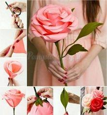 róża XXL