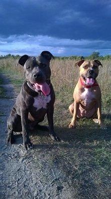 najukochańsze rasy psów ;)