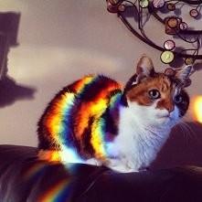 Ale uroczy kotek (idealny m...