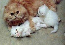 Małe słodkie futrzaki :)