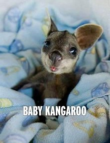Mały kangurek <3