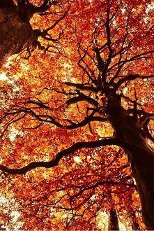Jesień <3
