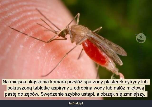 Domowe sposoby na ukąszenia komarów  26 maja 2014 13:37 | Skomentuj (1)