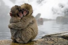 Małpeczki :D