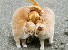 Ruda przyjaźń <3  Zdjęcie, które nie może nie wywołać uśmiechu.  Macie swoich dobrych i wiernych przyjaciół ?