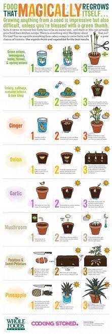 jak wyhodować warzywa i ananasa :-)