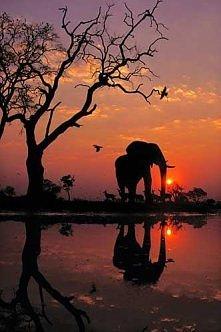 Piękne zdjęcie
