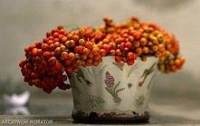 Wartości odżywcze jarzębiny Owoce jarzębu, znanego, powszechnie rosnącego u nas drzewa, są ozdobą jesiennego krajobrazu. Koralowe, kuliste owoce to doskonałe źródło witaminy C (...