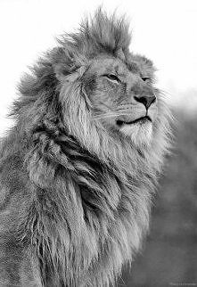 to be king...