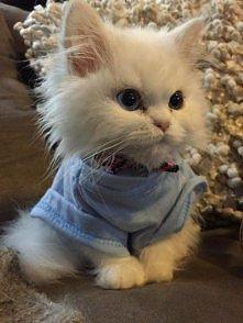 Uroczy Kociak na udany wtorek ;)