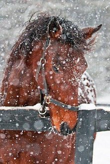 koń <3