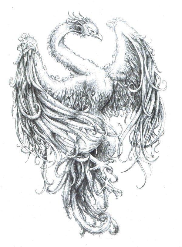 Feniks Na Wzory Tatuaży Zszywkapl