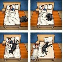 Czego się nie robi dla zwierzęcych przyjaciół;)