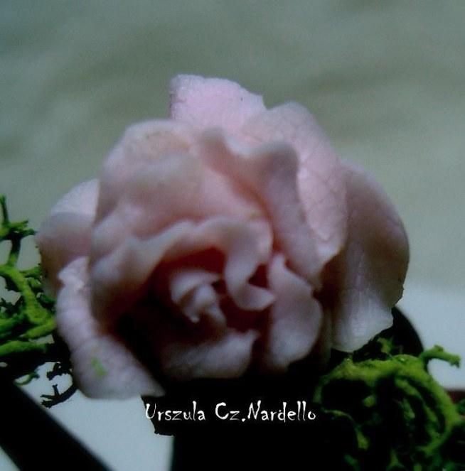 roza modelowana 1:12