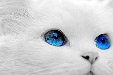 jakie piękne oczy ♥