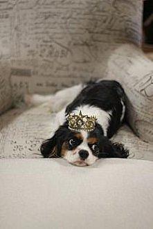 księżniczka (myśli księciu)  *.*
