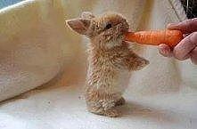 słodziutki króliczek
