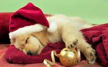 Waiting for Santa is hard work