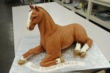 tort- koń