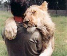 przytulanki z tygrysem :D