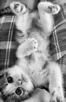 Sweet kitten!