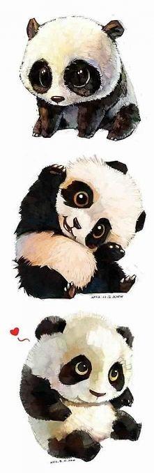 słodka,mała panda <3