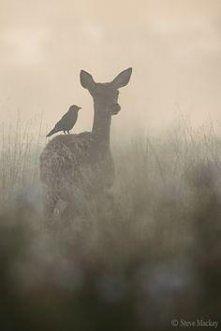 sarenka i ptak.