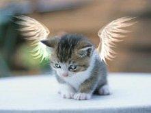 koci aniołek