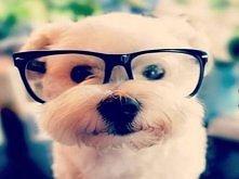 Mały Profesorek:)