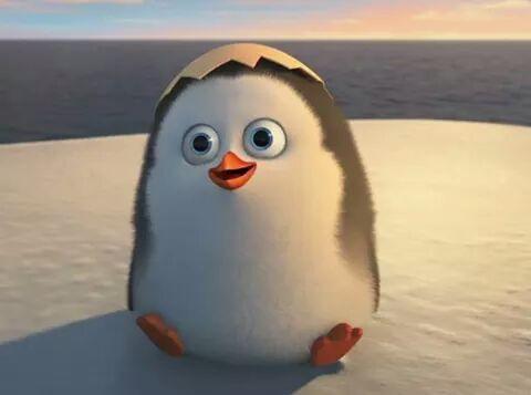 Pingwiny z madagaskaru zaraza online dating 1