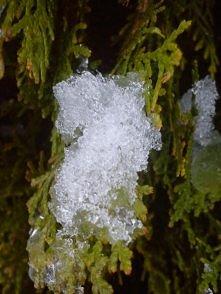 wpis o wolności i zimowe zdjęcia - klik w zdjęcie :)