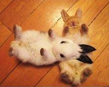 slodziutkie króliczki :)