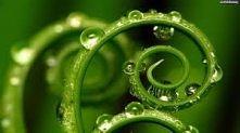 Zielona roślina.
