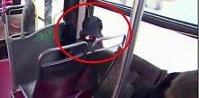Niezwykły pasażer na gapę podbija serca Internautów!