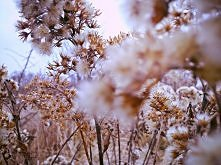 Zimowe zdjecie :)