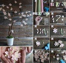 kwitnące drzewko