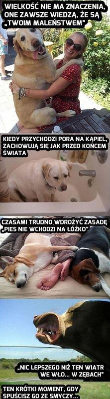 O psach kilka prawd :)
