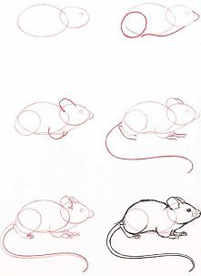 mysz - krok po kroku