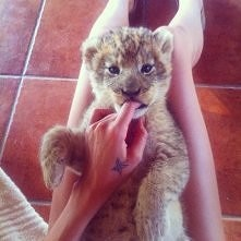 """oj chciałbym się pobawić z takim kotkiem  :"""")"""